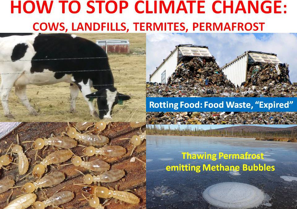 HOW TO STOP CLIMATE CHANGE AND BE HEALTHY: COWS, ROTTING FOOD IN LANDFILLS, TERMITES, PERMAFROST