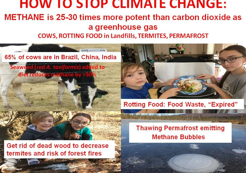 HOW TO STOP CLIMATE CHANGE AND BE HEALTHY: COWS, TERMITES, LANDFILLS, PERMAFROST